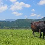 日本のブランド牛